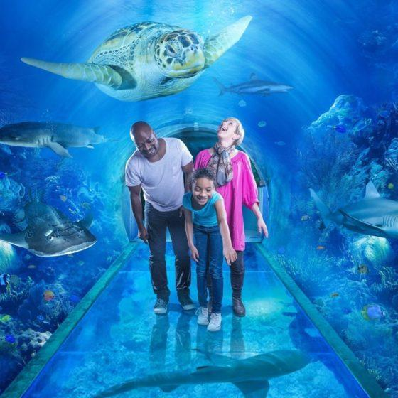 Westside's Sea Life boss: 'Government should treat us the same as non-essential retail'